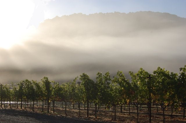 Porter Family Vineyards in the morning fog